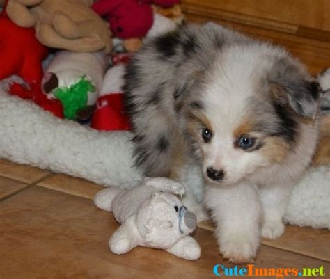 fluffy names fluffy puppy names images