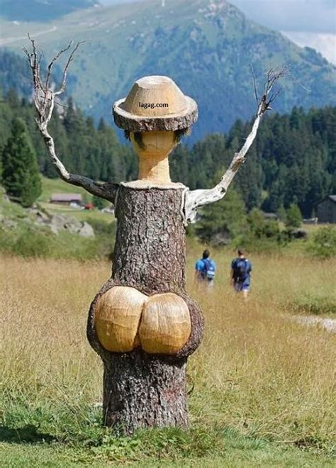 amazing tree discover mass of funny facebook status and funny jokes quotes amazing trees