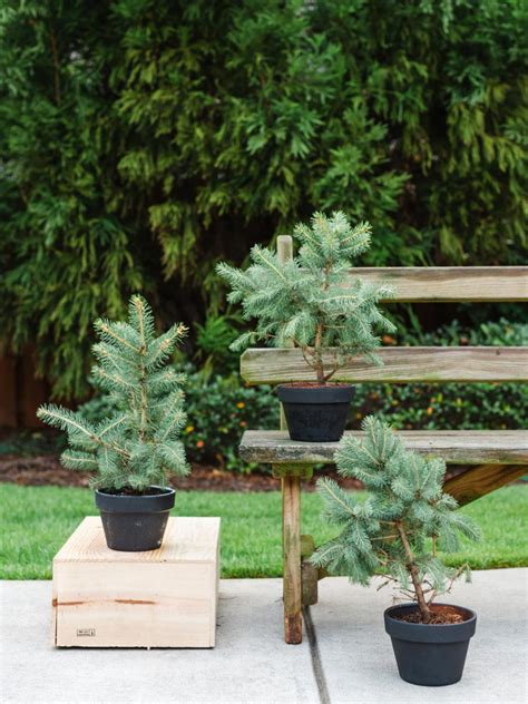 best patio trees winter friendly patio plants hgtv