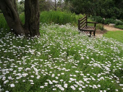 Kirstenbosch Botanical Gardens Indigenous Plants Kirstenbosch An Indigenous Botanical Garden The Garden Visitor