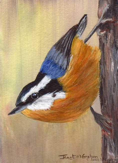 painting birds acrylic bird painting breasted nuthatch bird aceo original