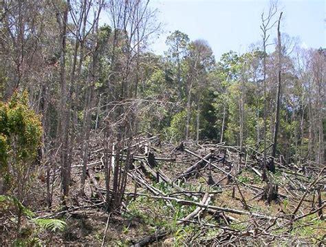 kerusakan hutan the knownledge
