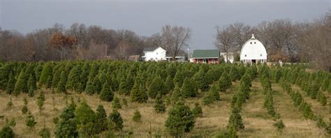 28 best illinois christmas tree farms chicagoland