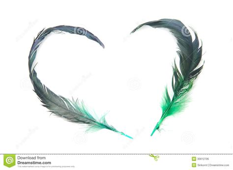 feather of love stock photo image of isolated swan