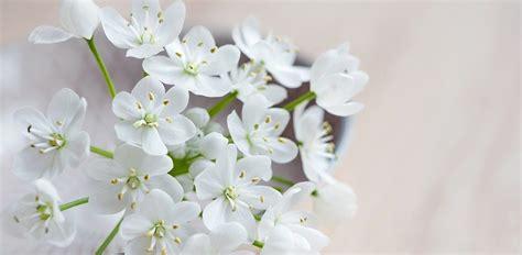 imagenes flores blancas flores blancas