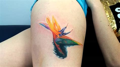 birds of paradise tattoo color bird of paradise