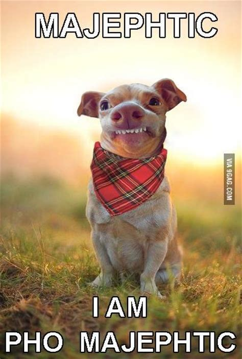 Dog With Overbite Meme - phteven dog selfie www pixshark com images galleries