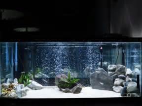 Japanese Aquascape Artist 78 Best Images About Fish Tank Ideas On Pinterest