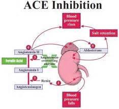 My 2 cents fluke or trend ace inhibitors vs alzheimer s