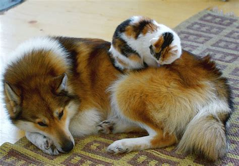 cute cats   dogs  pillows