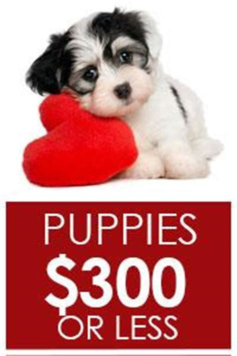 lancaster puppies ohio puppies for sale lancaster puppies