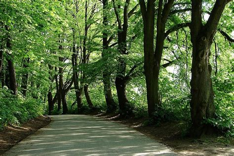 Fantasis Foto Di Pinggir free photo tree forest leaves shade shadow free