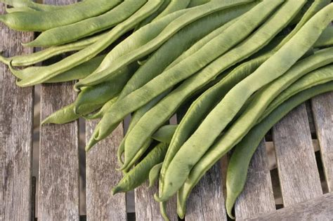 10 Vegetables To Plant Now For Winter Meal Updated What To Plant In Vegetable Garden Now