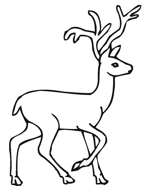 deer coloring pages to print free deer and fawn coloring pages