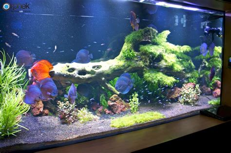 led lights for planted freshwater aquariums planted freshwater aquarium lighting orphek
