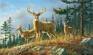 John Deere Wall Murals whitetail deer wallpaper