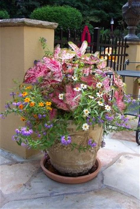 beautiful container gardens beautiful pot container gardening hanging baskets