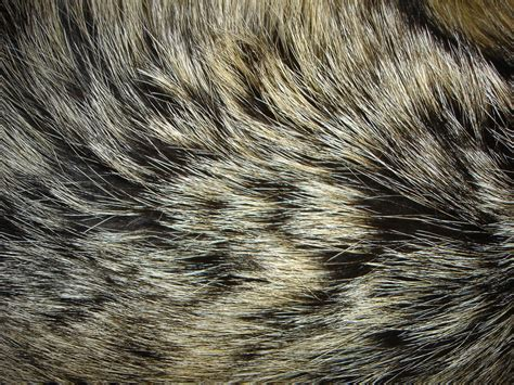 hairby minklittle 1000 images about wolf fur on pinterest wolves silver