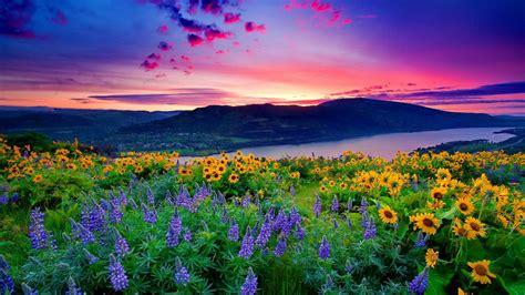 nature landscape yellow flowers  blue mountain lake
