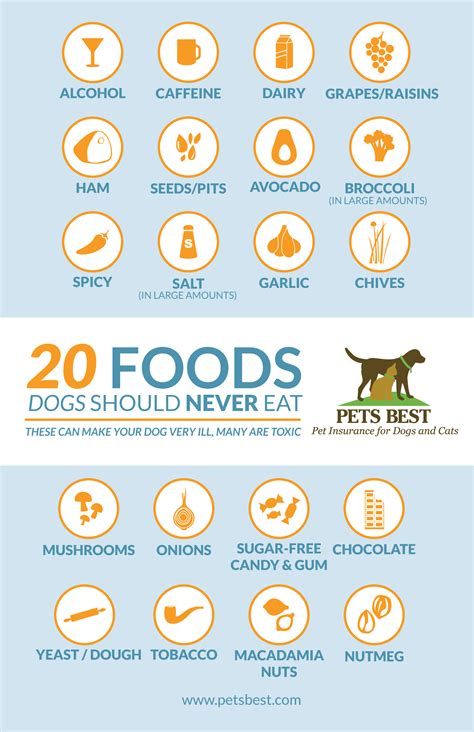 what should dogs not eat 20 foods dogs should never eat infographic about town