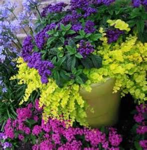 Flowers For Container Gardening Fibermania Container Garden