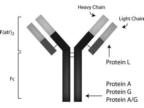 rprotein a sepharose sepharose protein a g pag50 00 0002