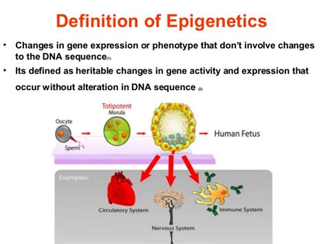 Modification Meaning And Definition by Definition Of Epigenetics