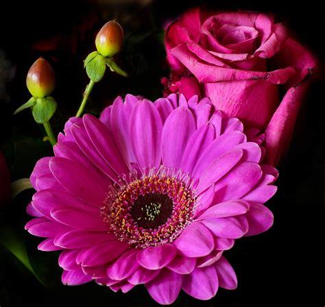 Bunga Poppy Pink Blossom flower blossom 183 free photo on pixabay