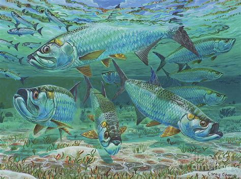 Shark Duvet Cover Tarpon Rolling In0025 Painting By Carey Chen