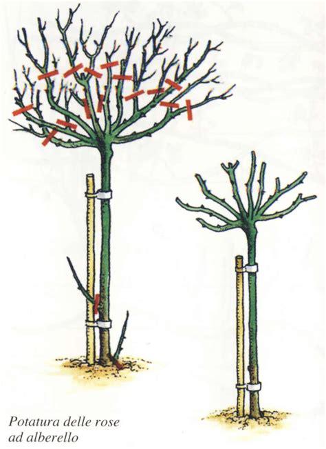 come potare i pomodori in vaso come potare le cura delle cura delle piante