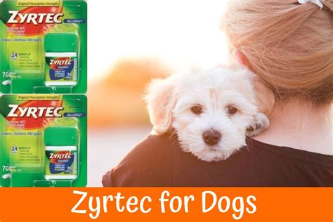 allergy meds for dogs zyrtec for dogs the best allergy medication a guide and review in 2017 us bones