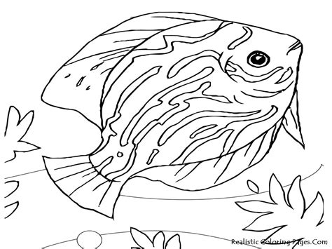 sea animals coloring pages to print sea creatures colouring pages page 2