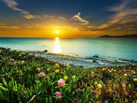sea coast meadow  tropical flowers sandy beach calm