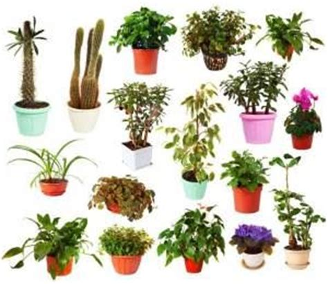 name of common house plant pics for gt indoor flowering plants with names