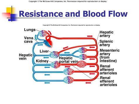 resistance in parallel blood flow cardiac output blood flow and blood pressure ppt