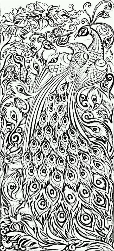 hard coloring pages of peacocks peacock coloring pages difficult for adults coloringstar