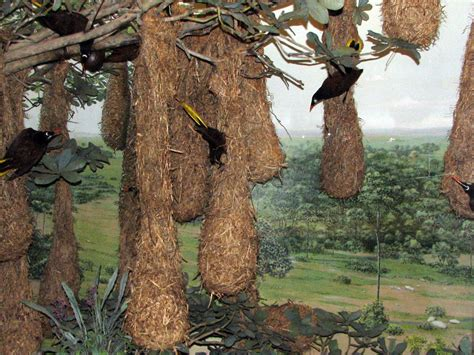 nature s engineers bird nests the transient biologist