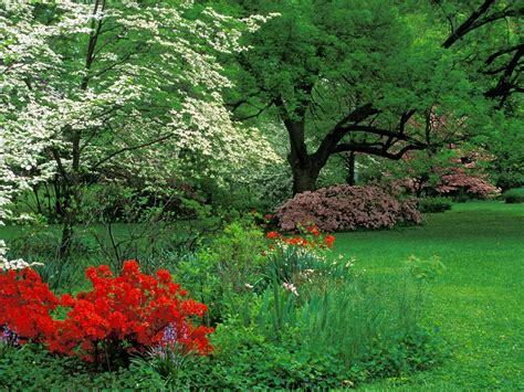 Time Garden by Wallpapers Hd 47 Wallpapers De Arboles Naturaleza Fondos De Pantalla Hd Y Hd Varias