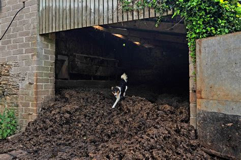Do Pigs Shed by How Pigs Can Compost Manure On A Farm Scale Saving You