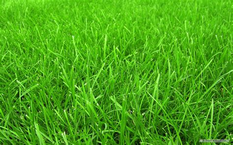 Paper From Grass - grass wallpaper grass cloth wallpaper grass paper