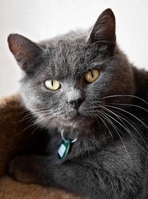 Wooley bear is a sweet shy boy with lots of love to give second hope