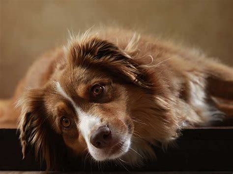diarrhea in puppies what causes diarrhea in dogs