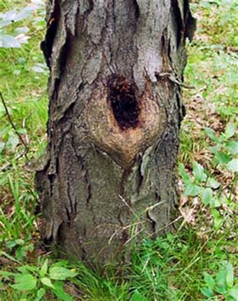 bug tree unlimited study probes ecosystem of tree holes newsroom