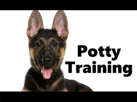 potty german shepherd puppy puppy potty housebreaking housetraining breeds picture