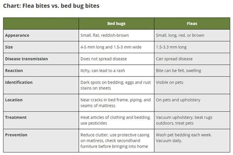 flea bites vs bed bugs 59 best bed bugs images on pinterest bed bugs beds and