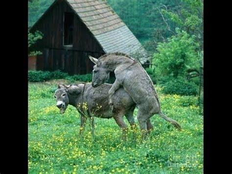 Donkeys Mating Images
