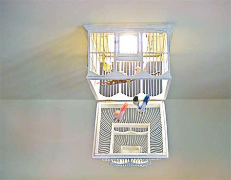 before after birdcage chandelier design sponge
