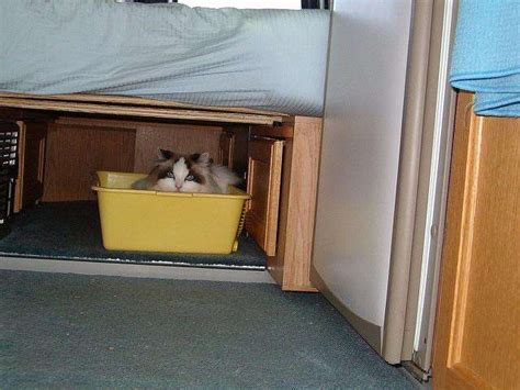 litter box in bedroom fulltiming in our class b rv with our cat class b motorhome blog