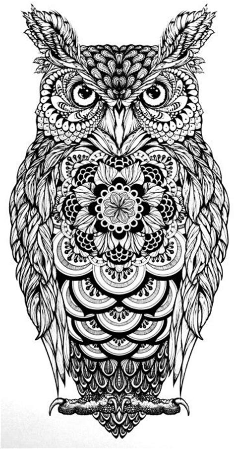 spotted owl coloring page pin von audrey king auf animals colouring pinterest