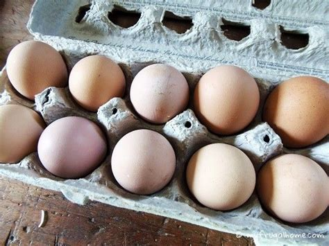 Egg Shelf Unrefrigerated by How To Store Fresh Eggs Chicken Chickens Backyard